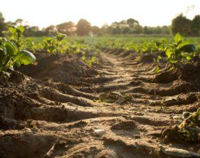 BioAS tecnologia de análise do solo