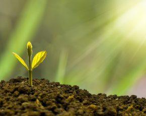 Broto de planta recebendo luz solar