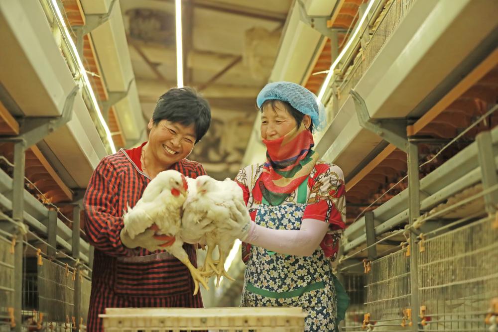 China deseja ser menos dependente da importação de carne, o que estimula a importação de soja para a manutenção da pecuária local. (Fonte: Shutterstock)