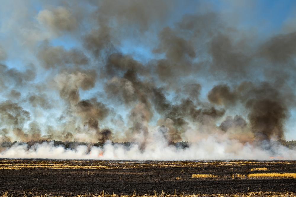 Empobrecimento do solo pelas queimadas pode estimular a pecuária extensiva no cinturão oeste do Brasil e, com isso, a demanda por soja. (Fonte: Shutterstock)