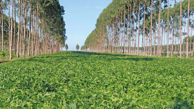Plantio de soja na ILPF