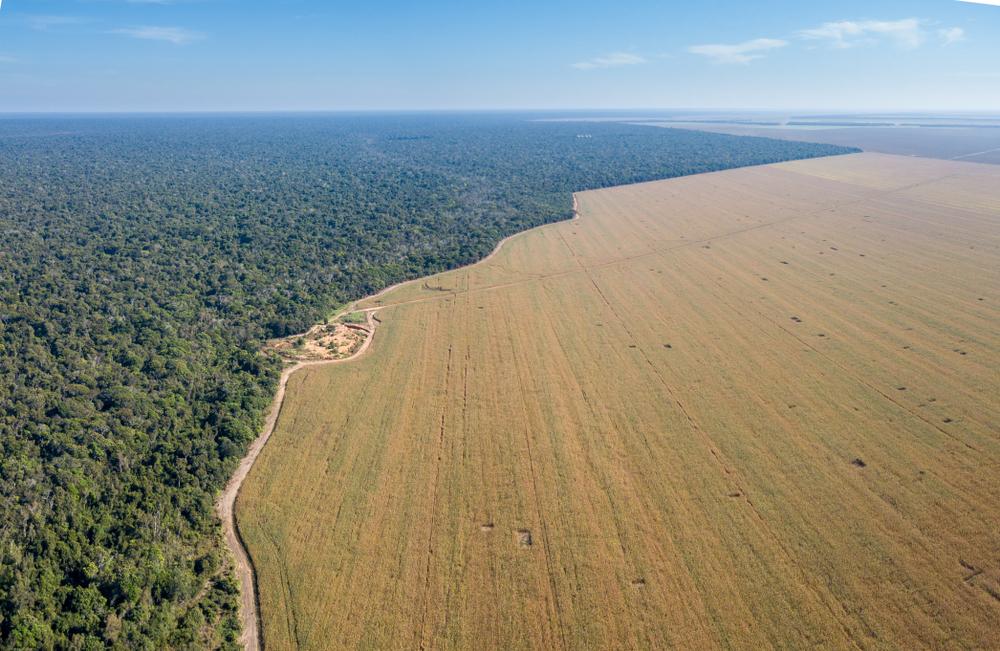 Nos últimos dois anos, desmatamento na Amazônia acelerou, segundo dados de satélite fornecidos pelo Inpe. (Fonte: Shutterstock)