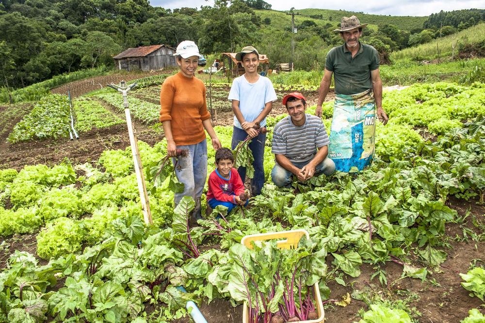 Agricultura familiar emprega 67% do total de pessoas ocupadas na agropecuária. (Fonte: Shutterstock/Alf Ribeiro/Reprodução)